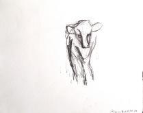 kalv 2002 - 25 x 25 cm - blyant på papir